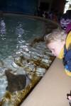De roggen zwemmen vlakbij