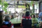 In 'the green room', een kas waar ooit de papegaai zat