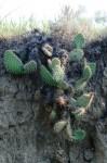 Er zijn zelfs cactussen