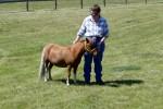 Uitleg over de mini paardjes
