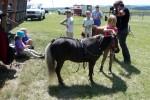 De pony wordt opgetuigd