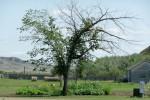 De Leaning Tree