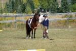 Inspectie van de pony