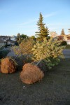 De bomen arriveren