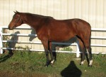 CJ Perfect Storm (Foxglove) is een 2002 Appendix Quarter Horse)